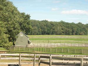 Horse Farm - Tewksbury